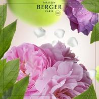 Róża - wkład do lampy zapachowej 500 ml - Maison Berger